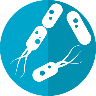 transilvania healing centre probiotice si prebiotice