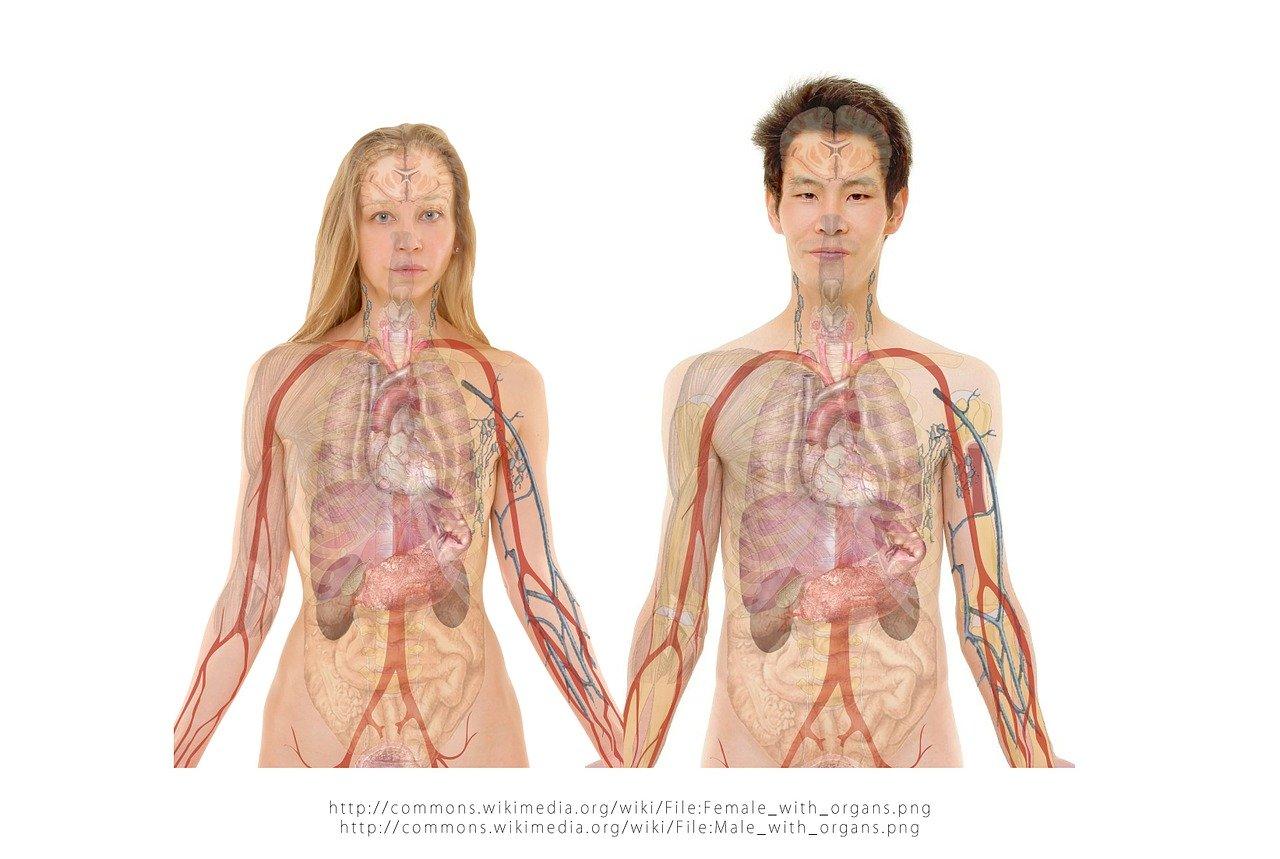 digestie usoara Relația dintre digestie, afecțiunile metabolice și imunitate woman 254133 1280